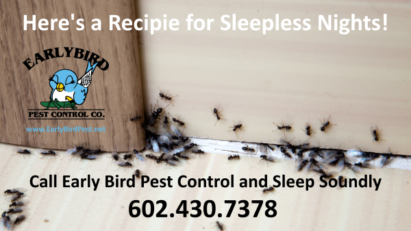 Phoenix Arizona Ant Infestation Pest Control