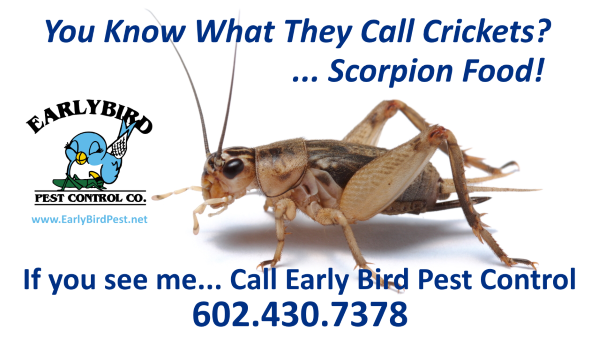 Arizona Crickets pest control