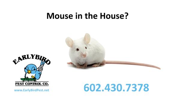 mice mouse exterminator pest control Phoenix Scottsdale Paradise Valley Arizona