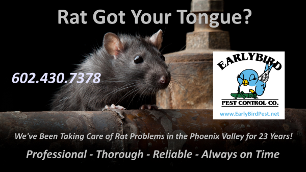 Phoenix Arizona Pest Control Services Rats Rodents