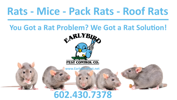 rats mice gophers rodents exterminator