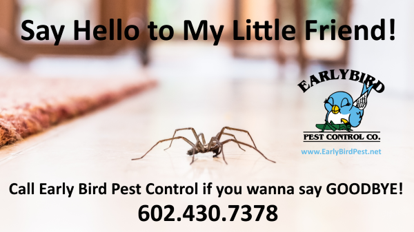 scorpion spider pest control in Phoenix Arizona exterminator in North Scottsdale and Paradise Valley AZ
