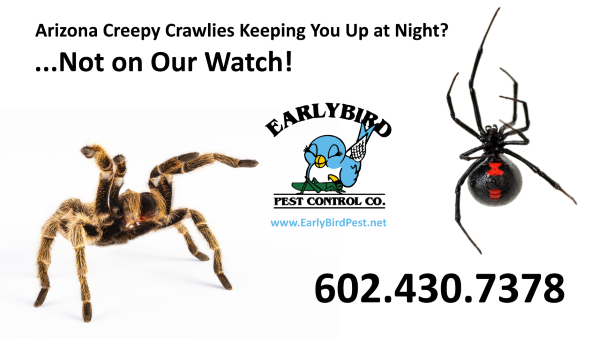 Arizona Spider Pest Control