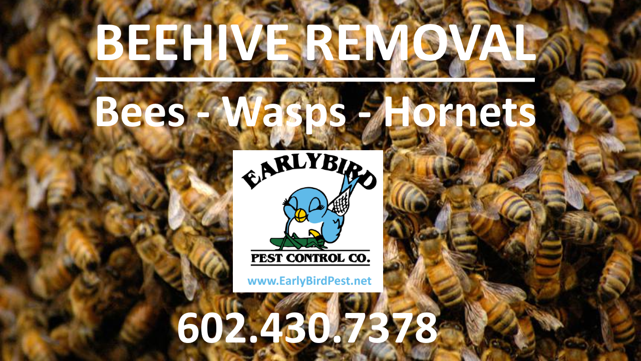 North Scottsdale Arizona Bee Wasp Hornet Beehive removal