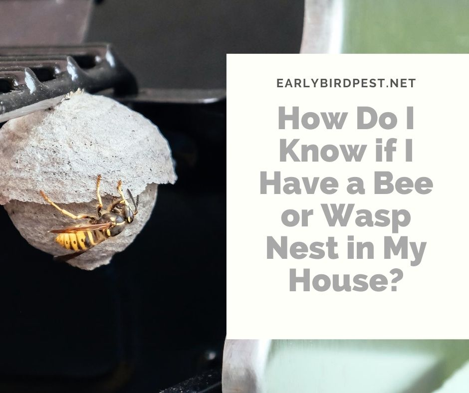 How Do I Know if I Have a Bee or Wasp Nest in My House?