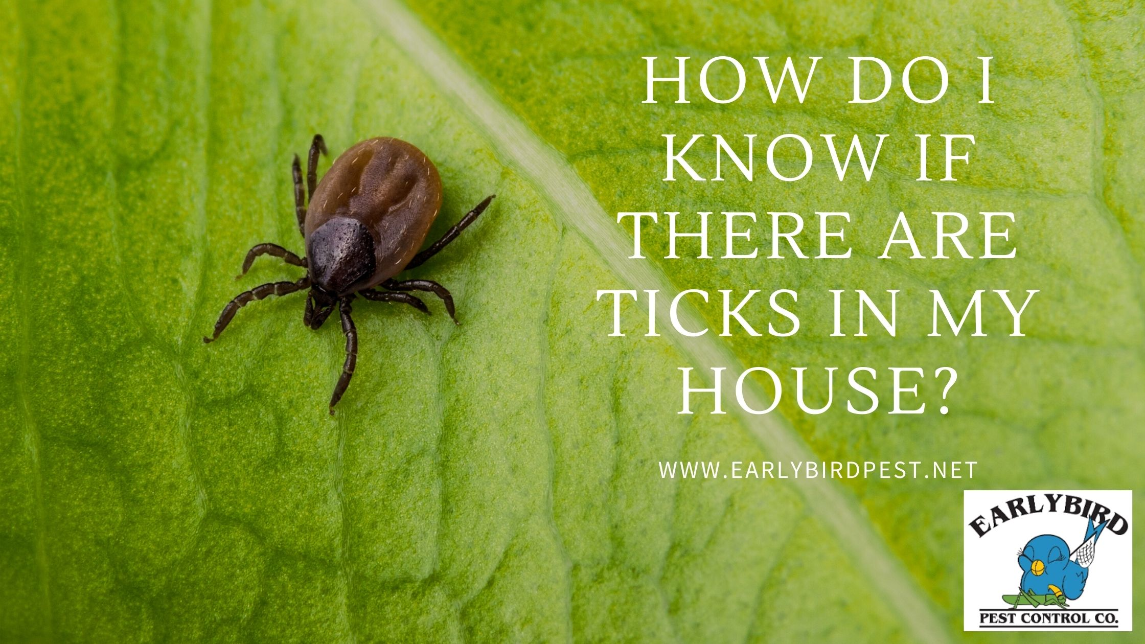 How Do I Know if There are Ticks in My House?
