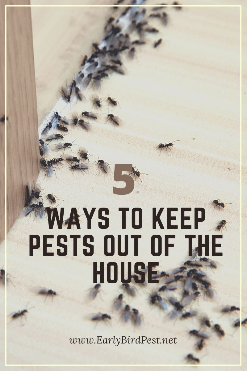 5 Ways to Keep Pests Out of the House