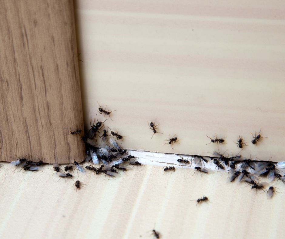 How Long Does a Pest Treatment Last?