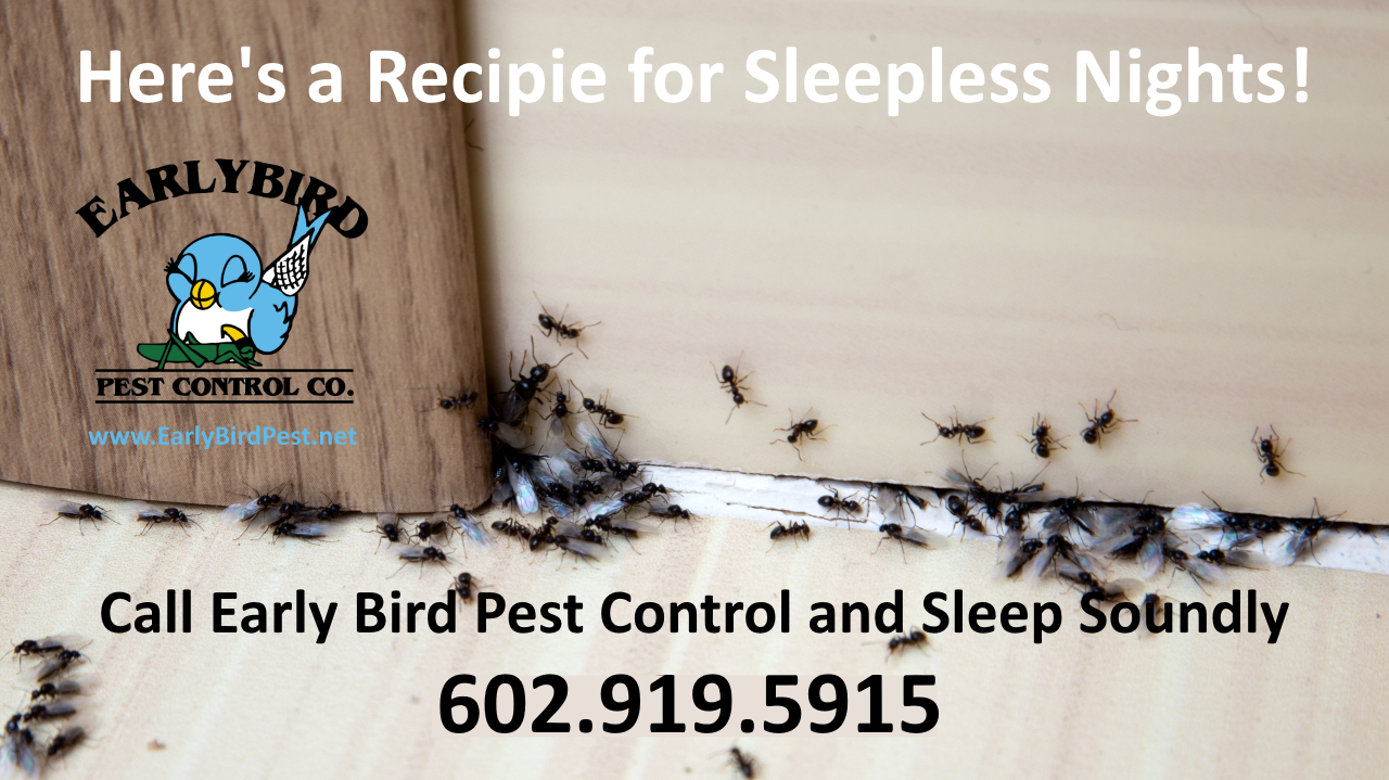 Litchfield Park Arizona pest control exterminator ants cockroaches spiders scorpions rodents and gophers