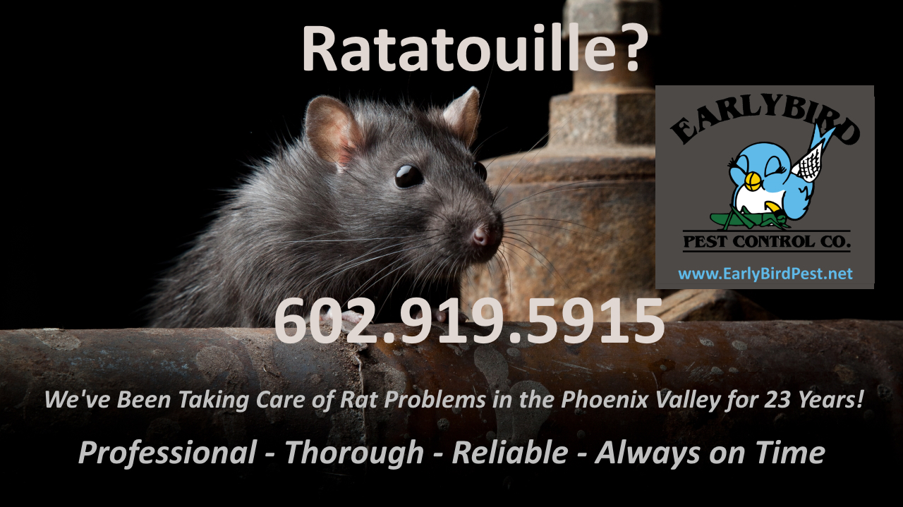 Rat rodent and mice exterminator and pest control in North Phoenix including Paradise Valley and North Scottsdale