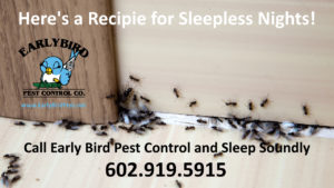 Paradise Valley Arizona pest control exterminator ants cockroaches spiders scorpions rodents and gophers