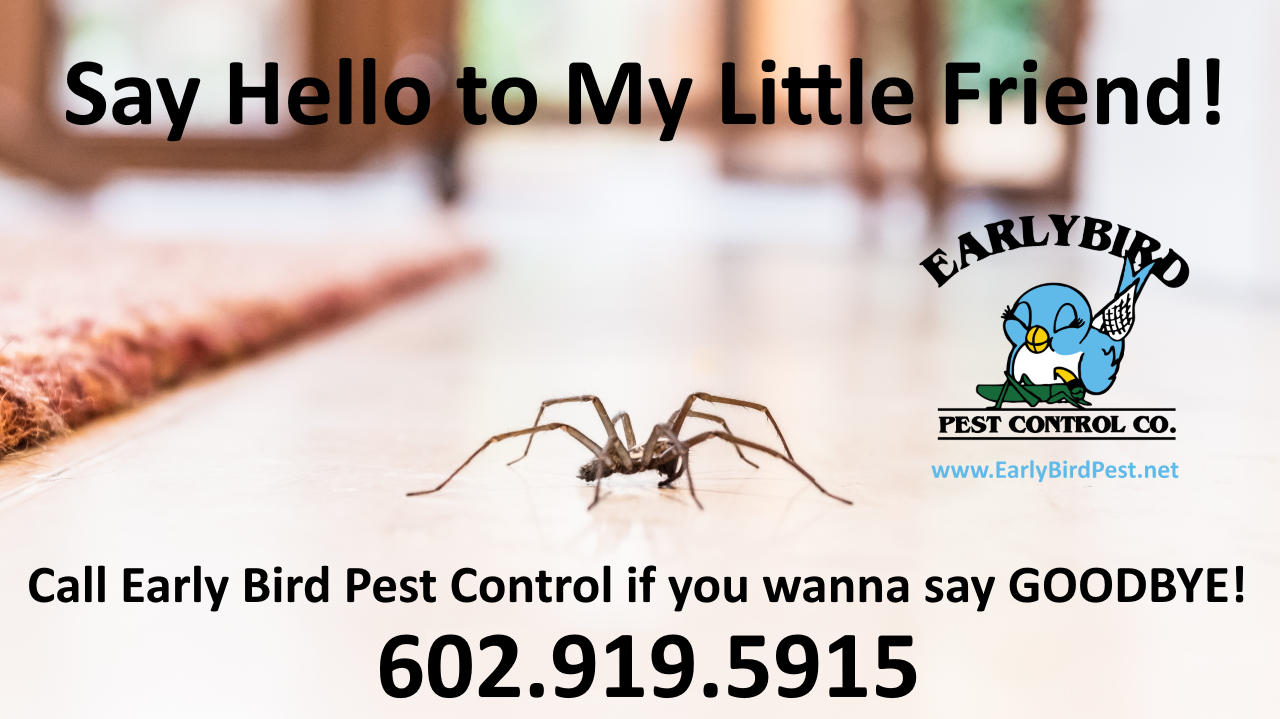Paradise Valley Pest control services in North Phoenix and North Scottsdale spider and insect exterminator