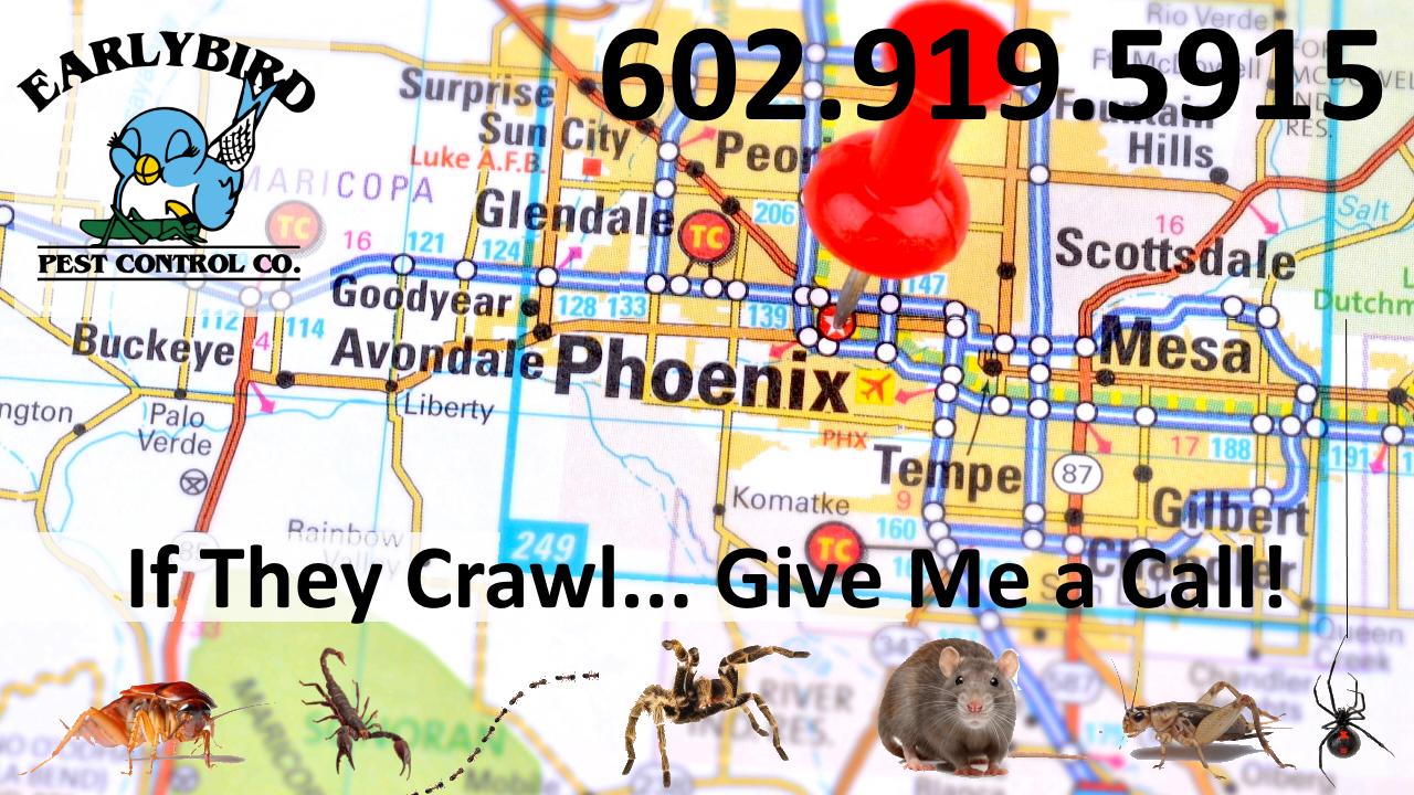 Phoenix Arizona Pest Control Exterminator North Scottsdale North Phoenix Paradise Valley Goodyear Litchfield Park Avondale Buckeye Peoria Surprise Sun City AZ