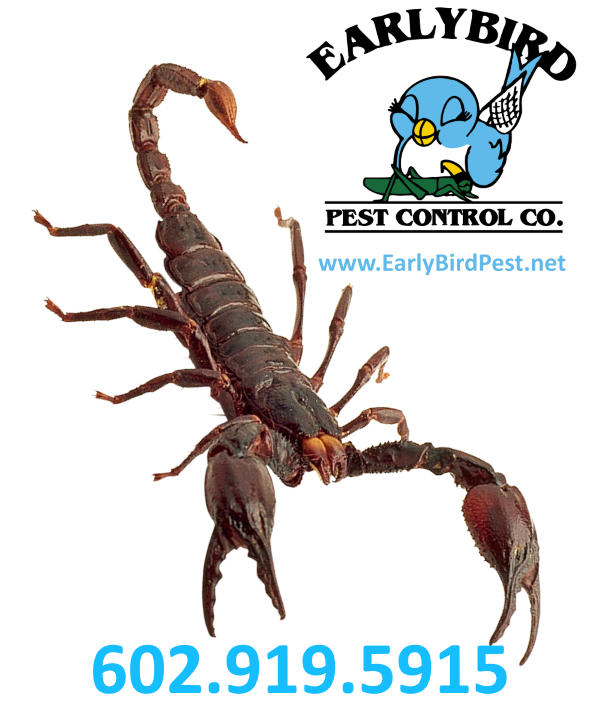 North Scottsdale and North Phoenix Arizona Paradise Valley Cave Creek Pest Control and scorpion exterminator