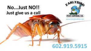 cockroach exterminator and pest control in Phoenix and Goodyear arizona Avondale Litchfield Park Peoria Surprise Sun City