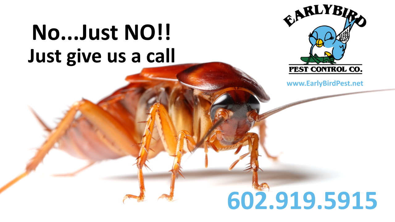 cockroach exterminator and pest control in Phoenix and Goodyear arizona Avondale Litchfield Park Peoria Surprise Sun City