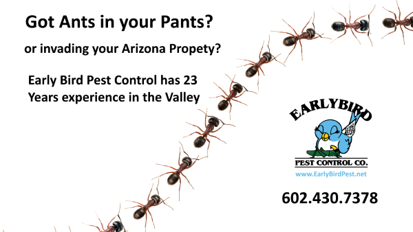 Phoenix and Scottsdale Arizona pest contol ntreating for ant infestation in Arizona