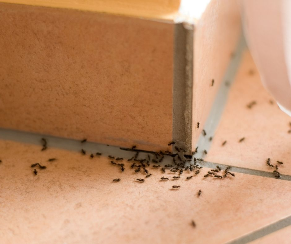 Do I Need a Permit for Ant Infestation Removal?