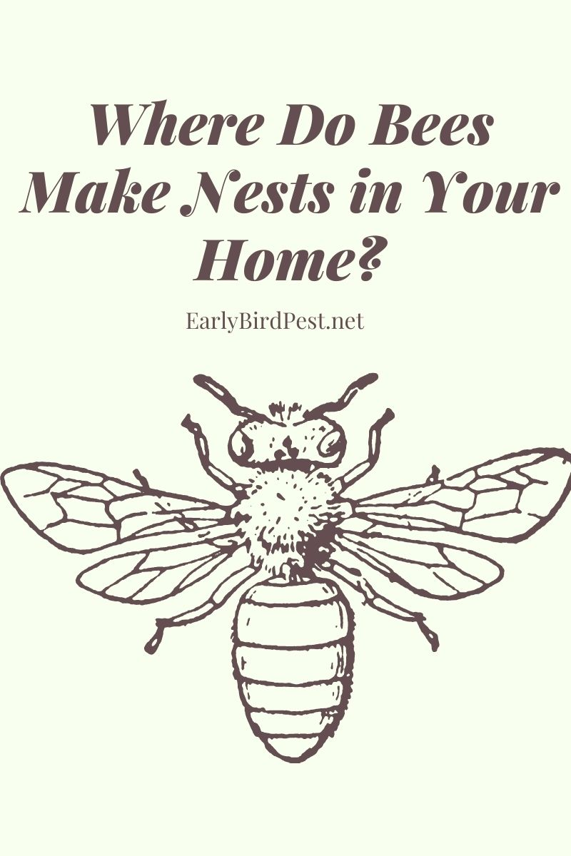 Where Do Bees Make Nests in Your Home?