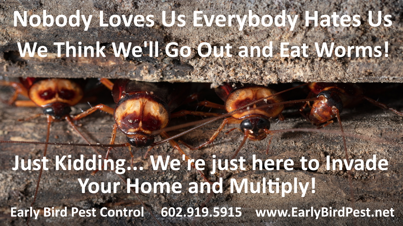 Cockroaches Ants Scorpions Bug and insect exterminator and pest control in Phoenix West Valley including Avondale AZ