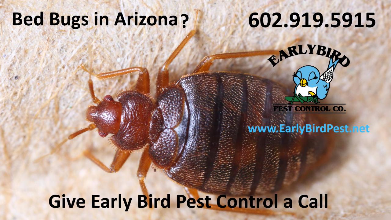 North Scottsdale Bedbug infestation pest control bedbug exterminator Scottsdale Arizona
