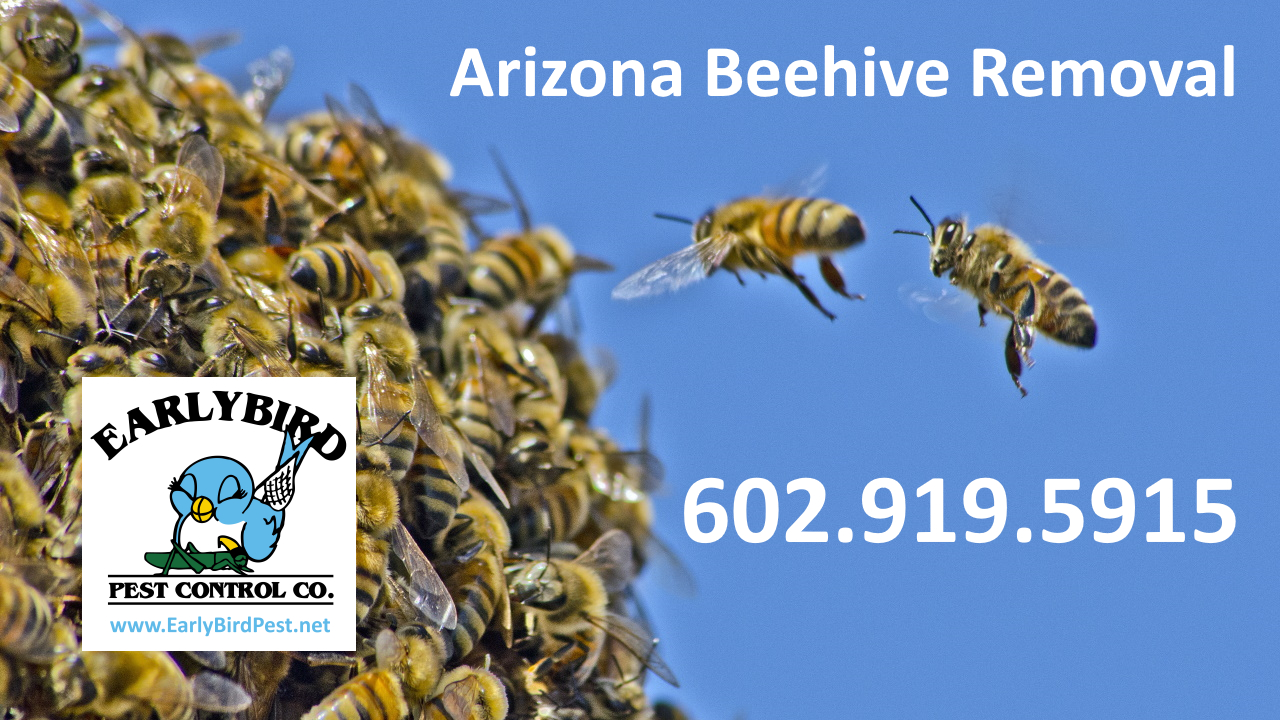 Cave Creek beehive removal Arizona Beehive Removal Service Bee wasp hornet Pest Control Exterminator