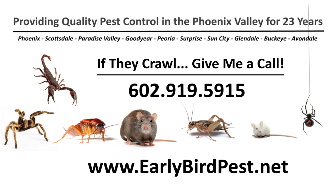 Quality pest control and extermination services in Cave Creek Arizona scorpions spiders ants cockroaches crickets beehive removal bed bugs rats rodents mice pack rats roof rats and gophers in Cave Creek AZ