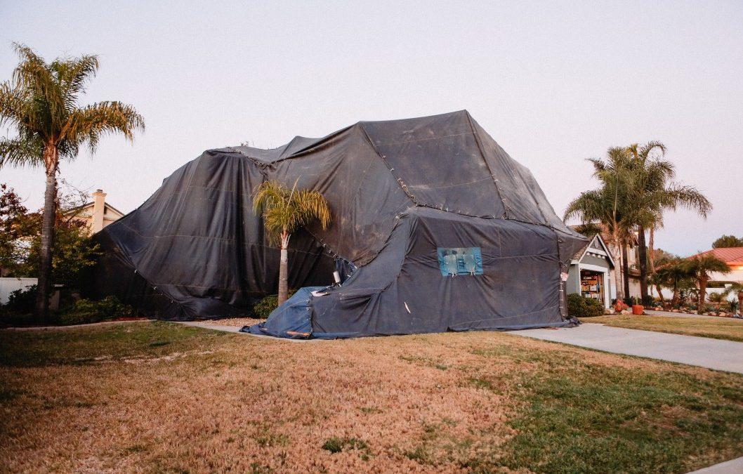 Can Pests Be Dangerous in Arizona?
