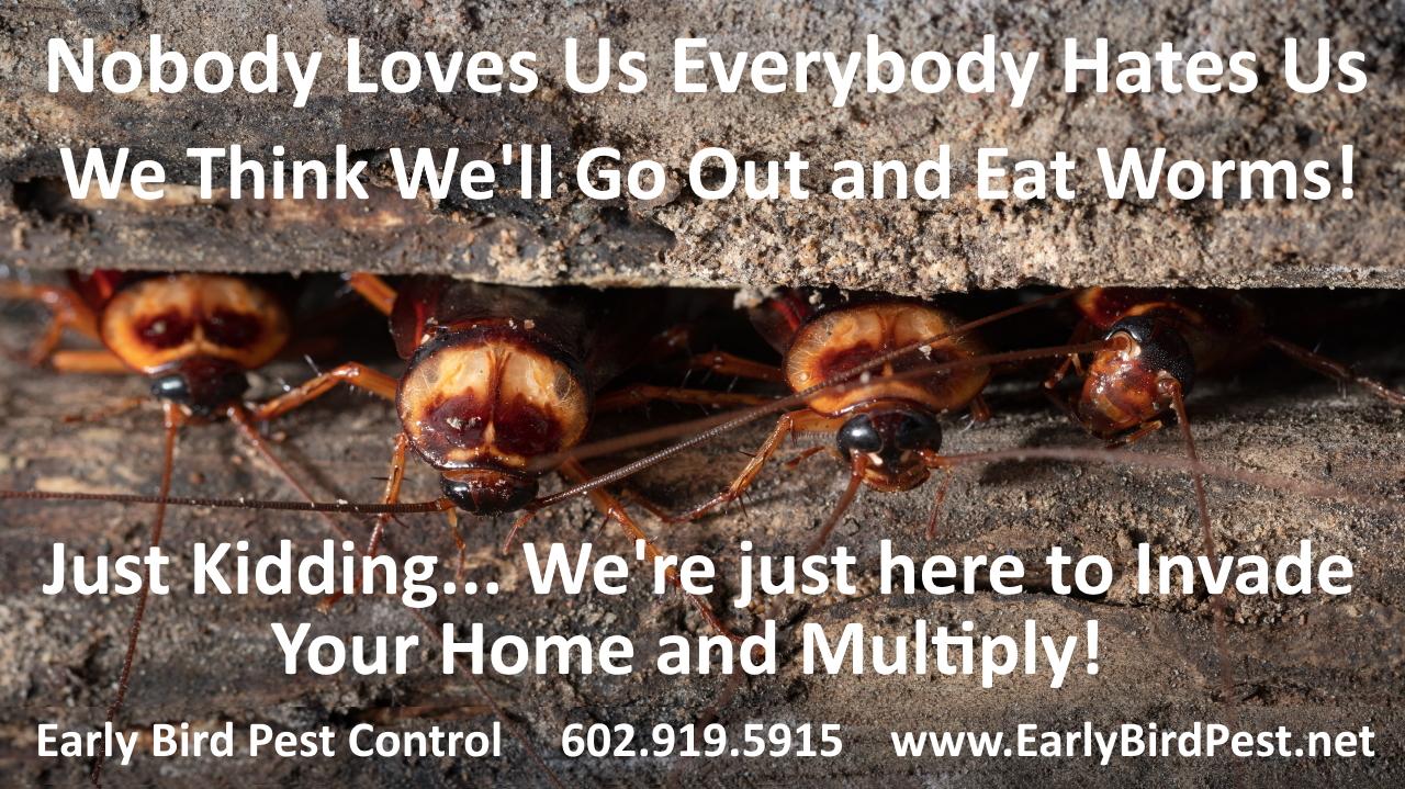Carefree Arizona cockroach pest control exterminator