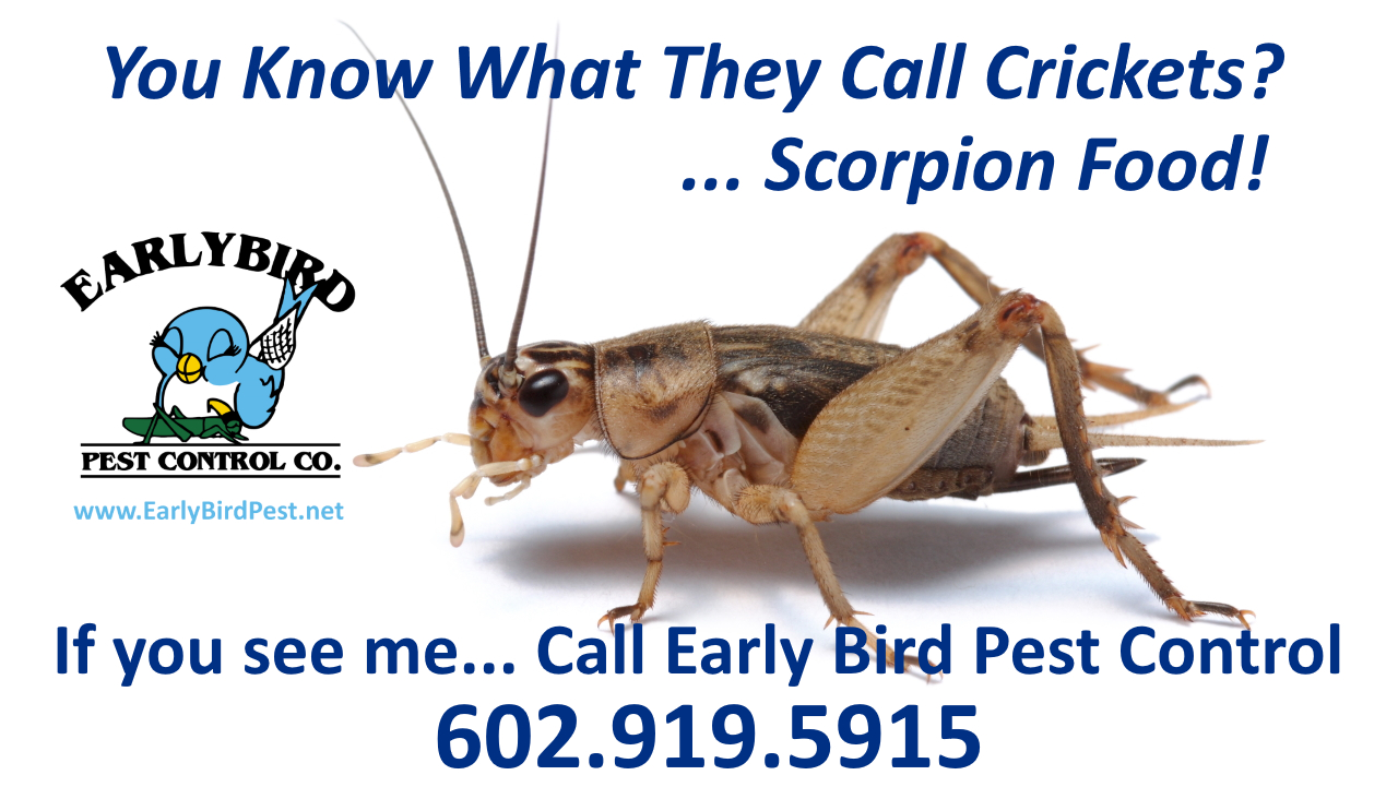 Bug and insect exterminator and pest control in North Scottsdale and Scottsdale. Paradise Valley, Cave Creek, North Phoenix AZ
