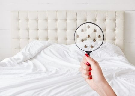 How to Know if You Have Bedbugs