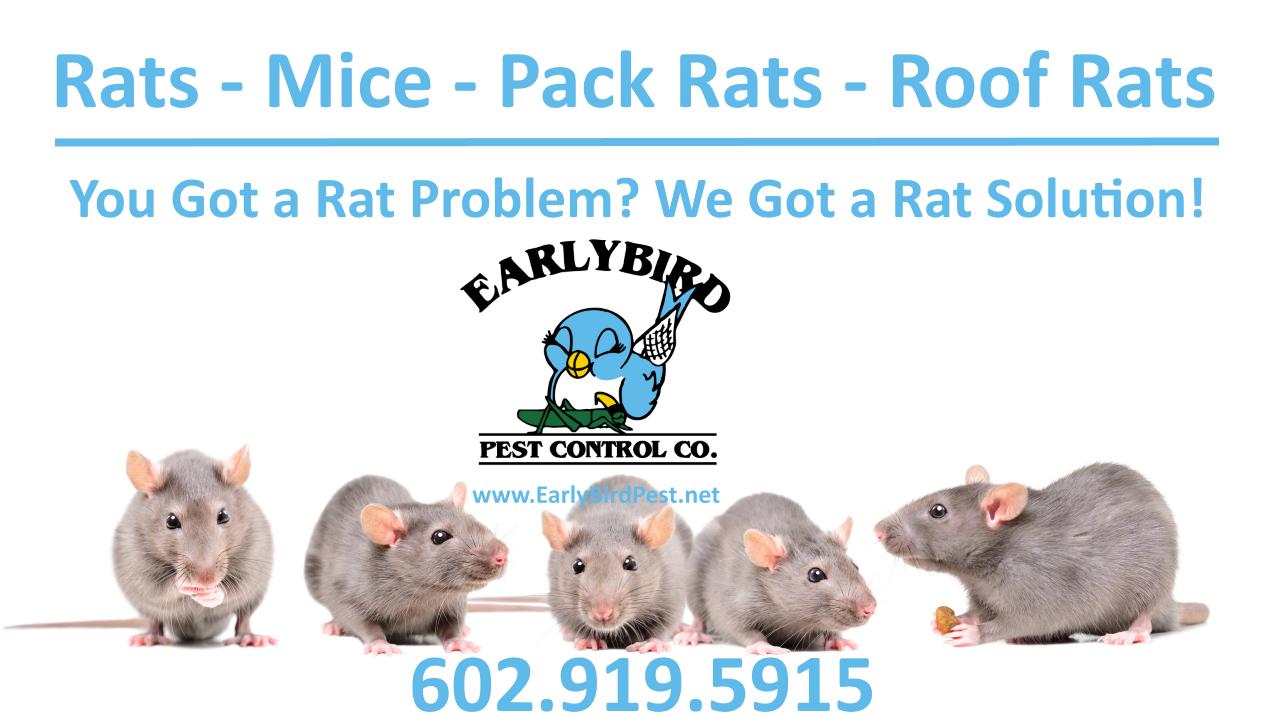 Rat and rodent exterminator in Phoenix and North Phoenix Arizona