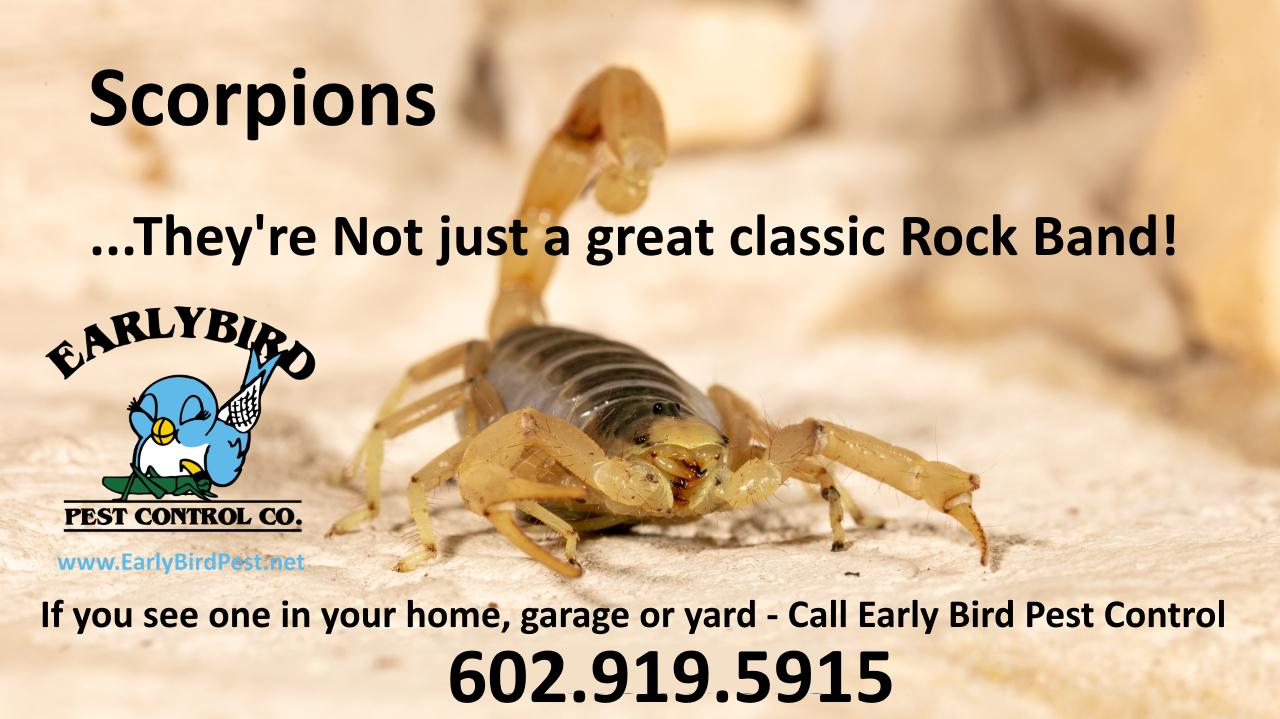 Surprise Arizona Scorpion pest control exterminator in the Phoenix Arizona West Valley