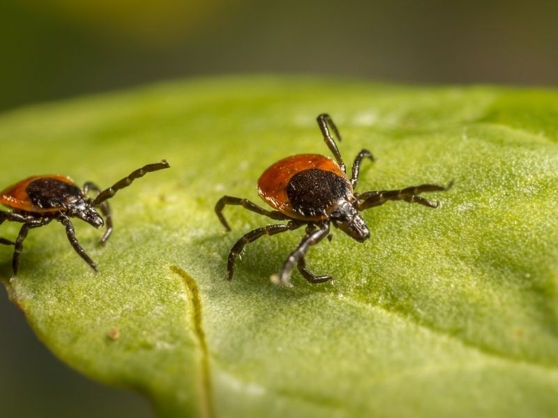 5 Ways to Prevent Ticks in Your House