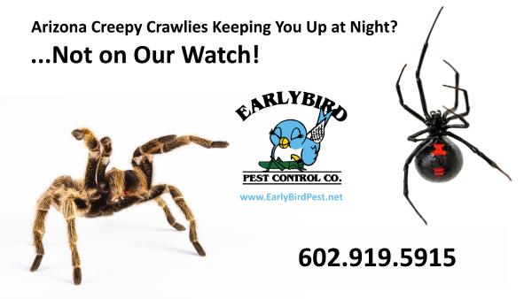 Sun City Arizona in the Phoenix West Valley pest control spiders cockroaches scorpions ants exterminator